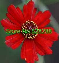 50+seeds/pack Coreopsis Ruby Red Dwarf Re-seeding Annual Flower Seeds Garden Decoration Bonsai Flower Seeds(China)