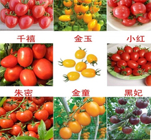 100pcs 24 KINDS Tomoto Seeds mixed packed Purple Black Red Yellow Green Cherry Peach Pear Tomato Seed Organic Food for Garden