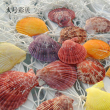 30pcs /lot Natural seashells crafts shells To stick The wedding party colors conch colors conch(China)