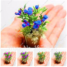 Promotion 200pcs Rare Flower Seeds Rose Seeds Mini Bonsai Plant Indoor Flower DIY Home Garden Colorful Rose Flower Planting(China)
