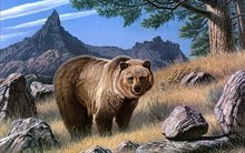 Bears Brown Painting Art Animals bear Home Decoration Canvas Poster