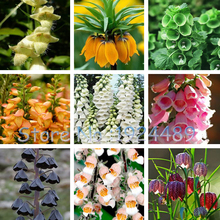 Beautiful 24 different color styles Fritillaria foxglove Digitalis potted bonsai garden seeds DIY home garden 100PCS