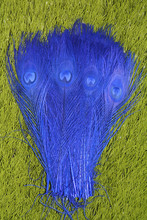 New! Free Shipping Sale 50 pcs / lot beautiful  Royal blue peacock tail feathers 10-12 inches Wedding, Party, Home.