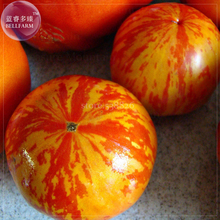 Heirloom Red Zebra Tomato with Golden Stripe Organic Seeds, 100 seeds, professional pack, Non-GMO tasty juicy fruits TS371T