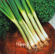 Time-Limit!!Vegetable - Spring Onion - White Lisbon - 100 PCS/Bag Ideal Cooking Vegetale  Big Promotion,#56P26Q