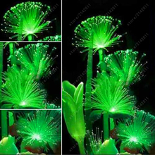 100 Pcs Rare Emerald Fluorescent Flower Seeds Night Light Emitting Plants for home Garden bonsai seeds(China)
