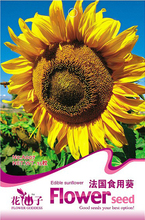 Buy 2 Get 1!(Can accumulate ) 1 Pack 15 pcs Seeds France Edible Sunflower  Seeds A007