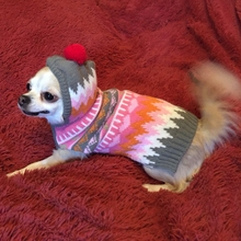 Rose Stripe Pet Cat Dog Clothes Winter Christmas hat Hoodie Warm dog Sweater for chihuahua Knitwear Puppy Clothing pet products(China)