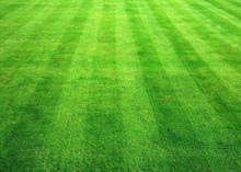 500pcs/bag Turf Grass Seeds,Golf,Special grade Evergreen Lawn Seeds,Soccer Fields,Villa,high-grade Flowers seeds garden plant(China)