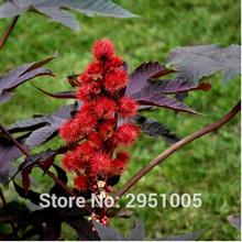 10pcs/lot Red Castor Bean Seeds, Medicinal Uses Ricinus Communis Herbal Seeds, Ornamental Plant Seeds home garden free shipping(China)