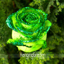 Big Promotion!Golden Green Rose Seeds, Professional Pack, 50 Pieces / Pack, Strong Fragrant Garden Rose Flowers,#H1NJLN(China)