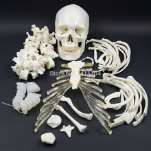 Free shipping&The human body scattered bones ,170cm human body bones, emulational skeleton model, medical orthopaedics. teaching