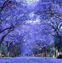 Blue Jacaranda Tree Seeds(Jacaranda mimosifolia)showy street tree drought tolerant Rare outdoor bonsai plant tree seeds20pcs/bag(China)