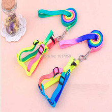 New Rainbow Designer Pet Product Leash Colorful Dog Collar Nylon Training Leads Adjustable Plain Collars For Big Small Dog Puppy