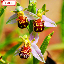 Big Sale!Bee Orchid Seeds Perennial Flowering Plants Potted Seeds Interesting Plants 50 Pcs/pack,#1923O3