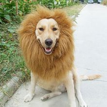 Pet Costume Cat Halloween Clothes Fancy Dress Up Lion Mane Wig For Dogs Festival Dress Up(China)