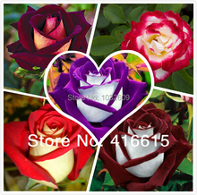 Bonsai flower seeds 200pcs Rainbow Rose Blue Pink White Yellow Red Green Purple Black Roses sementes de rosa
