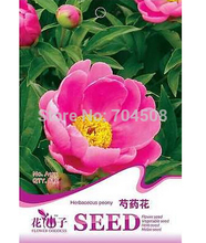 FD1582 Herbaceous Peony Seed Paeonia Lactiflora Garden Flower ~1 Pack 6 Seeds~