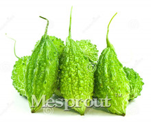 Free Shipping Garden Bitter Melon Seeds Vegetables 10g/Guangdong Green Balsam Pear Body is Home & Garden Plant Seeds