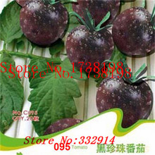``Hot Big promotion 100pcs TOMATO SEEDS Cherry Peach Pear Tomato seed Purple Black Red Yellow Green Non-GM Organic Food Bonsai p