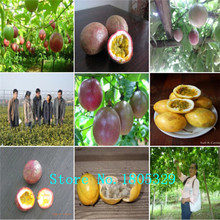 GGG 100Pcs Exotic Passion Fruit Seeds Purple Passiflora edulis Passion Flower seeds Outdoor plant(China)