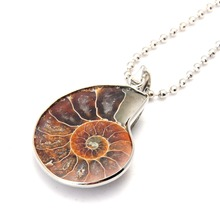 Ammonite Fossils Pendant Shell Ammonite Necklaces(China)