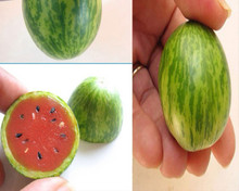 20 grain / bag thumb watermelon seed watermelon. Vegetable seeds indoor plant mini watermelon watermelon seeds
