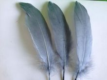 Loose Gray goose feathers (200 Feathers) popularly used for wedding flowers, fascinators, derby hats and flapper headdresses