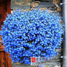 Blue Flowers Flax Four Seasons Easy Sowing Flower Potted Meat Plant Seeds Vanilla Seeds 100Seeds