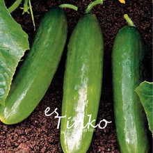 30pcs Green Cucumber Seeds Cucumber 'Diva' Fruit and Vegetable Seeds Cucumis Sativus Home Garden Plant DIY(China)
