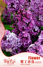 Original Pack 20 Seeds / Pack,Early Lilac seeds,Syringa oblata Lindl,Lilacs flower,Balcony potted lilac