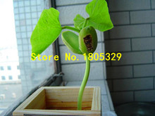 GGG Vegetable seeds Magic bean Seed Gift Plant Growing Message Word Love Garden Plant Bonsai 5pcs/bag(China)