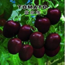 Purple Rose small tomato seeds 100 seeds hot organic vegetable(China)