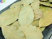 20g bay leaves, laurel leaves, fragrant bay leaf, Tianzhu Gui - Organic Oriental cuisine fragrant bay leaf health raw material(China)