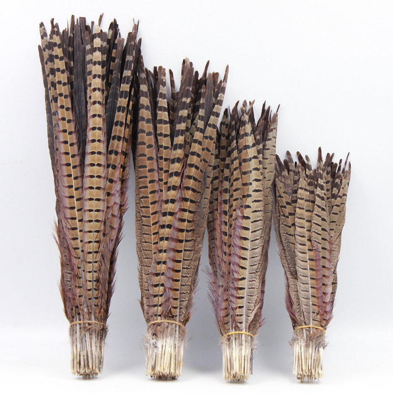 Pheasant feathers 30