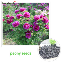 Chinese peony seeds potted peony flower so pretty bonsai high quality 16 colors complete 100% true seeds 20 particles / bag(China)