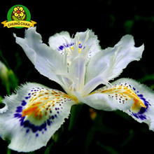 2017 Hot Flowers Seeds Japanese Iris Japonica Seed 100PCS White Iris Orchid Rare Exotic Flower Easy to plant Garden Home Bonsai(China)