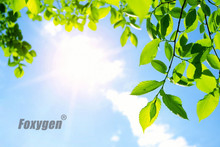 Buy Stretch ceiling film blue sky  sunflower low price from China factory