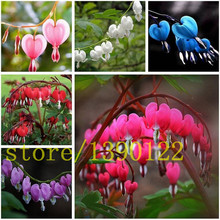 200 Heart Flower Seeds Dicentra spectabilis Sweet Heart Wallet Peony Flowers  For home  garden plant