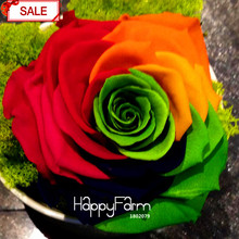 Loss Promotion!Crazy Promotion Rainbow Rose seeds DIY Home Garden Colorful Rose Flower Plant,50 seeds/pack,#NWMY8H