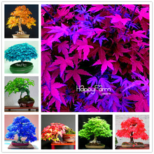 Time-Limited Promotion!!!30 Pcs/Bag japanese maple tree seeds, 13 color mixed mini bonsai tree flower seeds +Christmas gift