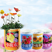Canned Bonsai DIY Plant Lavender Four Seasons Flowers with Seeds Cans Indoor for Planter Student Gift Home Study Office Decor