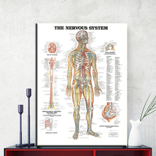ZZ1853 the nervous system poster print canvas painting Anatomy Medical wall art Picture Living room Home Decoration Giclee print