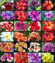 Multicolor mixed 40pc Table Decorations Plumeria Hawaiian Foam Frangipani Flower For Wedding Romance Freeshipping(China)