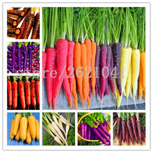 500pcs/bag carrot seeds,fruit vegetable seeds,9 colours to choose,sweet and healthy,plant for home garden(China)