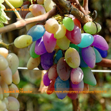 Rare Organic Rainbow Grape Seed, 30 Seeds/Pack, Bonsai Fruit Grapes Seed Easy To Grow!-Land Miracle