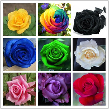 2017 HOT SALE Free shpping 9 Mix Colors 200pcs Seeds Rainbow Rose Seeds Rare rose Flower seeds DIY Garden & Home Planting