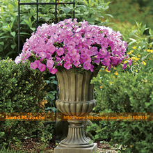 50Seeds/Pack, Pink Shades Petunia Seeds for Garden Home Bonsai Plant Flower, continuous bloom from mid-spring 'til early fall!