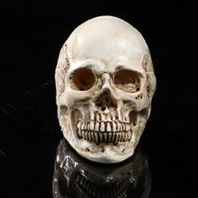 Ghost Evil Homosapiens Skull Human Skeleton Head Halloween Prop Model White