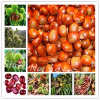 Chinese-Chestnut-Seeds-30Pcs-bag-Nut-Seeds-Bonsai-Plant-Delicious-Nutrition-Fruit-Tree-Easy-Grow-for.jpg_200x200